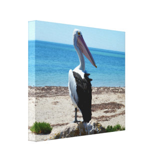 Pelican On Beach Rock, The Hungry Games Begin, Canvas Print