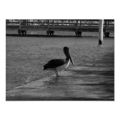Pelican on Dock - Black & White Poster