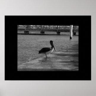 Pelican on Dock -Black & White Poster Black Border