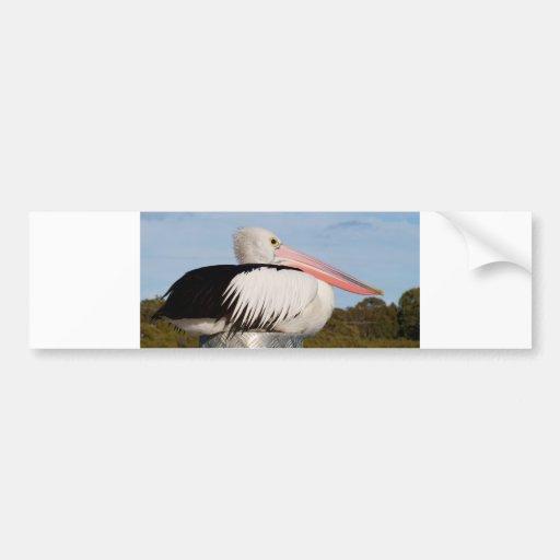 Pelican Post Bumper Sticker