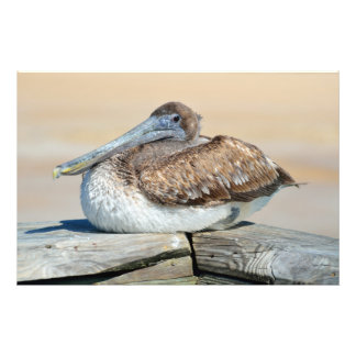 Pelican resting on the fishing pier photo print