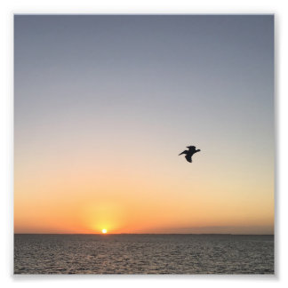 Pelican Sunrise Photo