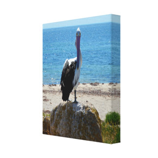 Pelican With The Look, Canvas Print