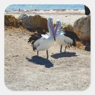 Pelicans_In_Love,_Square_Shaped_Sticker. Square Sticker