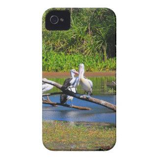 Pelicans in wetlands, Outback Australia iPhone 4 Case