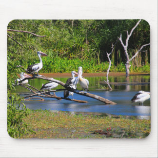Pelicans in wetlands, Outback Australia Mouse Pad