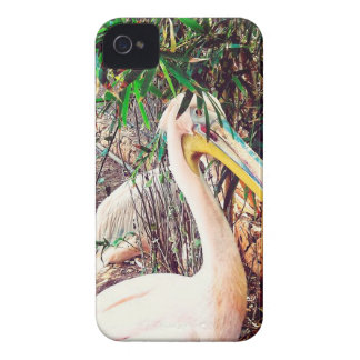 pelicans iPhone 4 covers