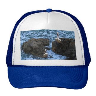 Pelicans_On_Big_Sea_Rocks,_ Cap