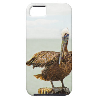 Pelicans perched on posts case for the iPhone 5
