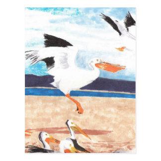 Pelicans Postcard