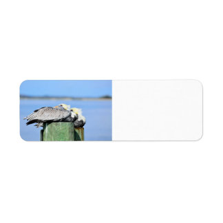 Pelicans Resting Return Address Label