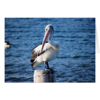 Pelicans seabirds ocean sea big birds feathers card