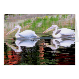 Pelicans Swimming in a Lake Card