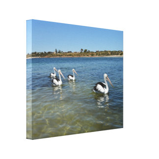 Pelicans Swimming On The Ocean, Canvas Print