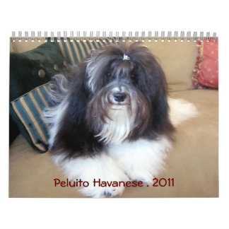 Peluito Havanese . 2011 Calendar
