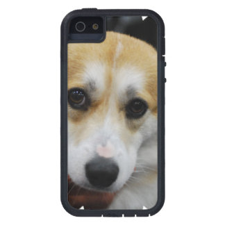 Pembroke Corgi Cover For iPhone 5