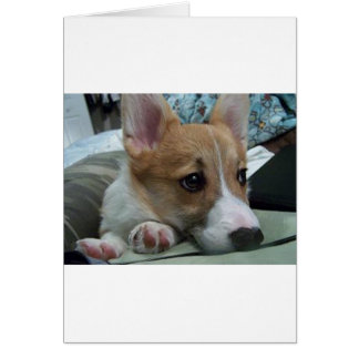 pembroke welsh corgi puppy 2 card