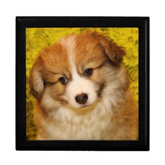 Pembroke welsh corgi puppy gift box