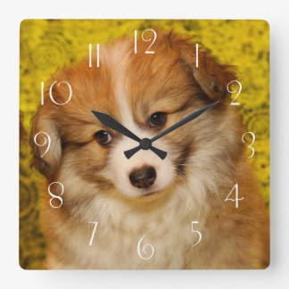 Pembroke welsh corgi puppy square wall clock