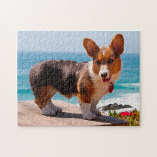 Pembroke Welsh Corgi puppy standing on table Puzzles