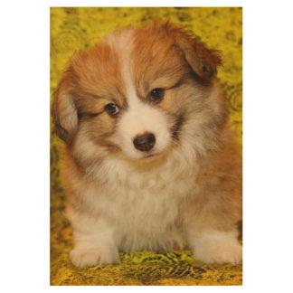 Pembroke welsh corgi puppy wood poster