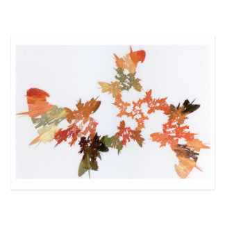 Pencil Shavings Postcard