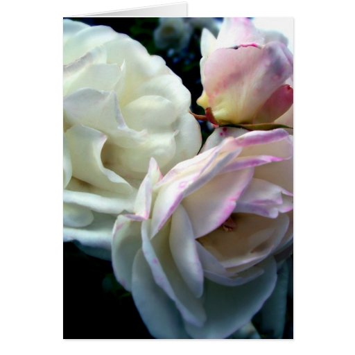 Penelope Roses Greeting Cards