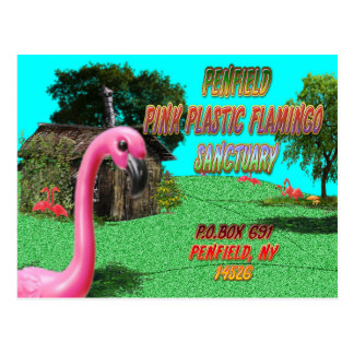penfield pink plastic flamingo sanctuary postcard