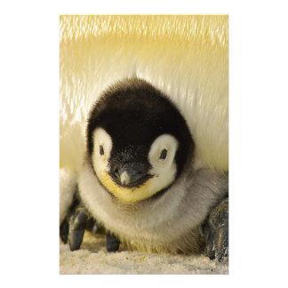 Penguin Baby Antarctic Life Animal Emperor Cute Stationery