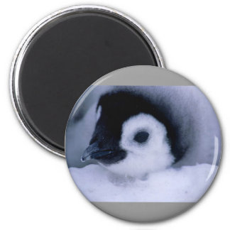 penguin baby magnet