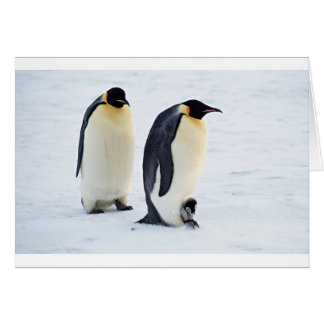 Penguin Bird Animal Ice Frozen Winter Card