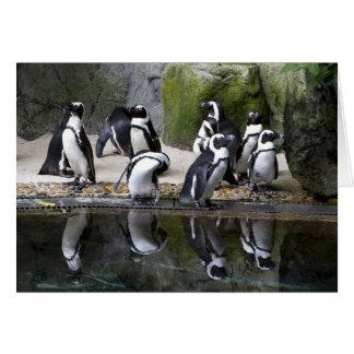 Penguin Blank Greeting Card
