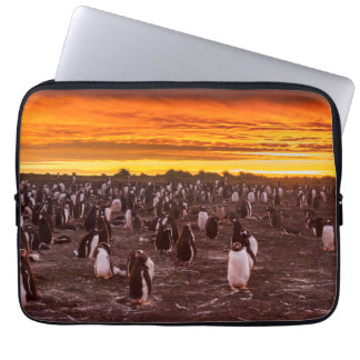 Penguin colony at sunset, Falkland Laptop Sleeve