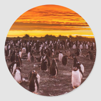 Penguin colony at sunset, Falkland Round Sticker