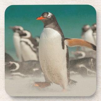 Penguin group on beach, Falklands Coaster