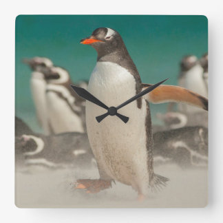 Penguin group on beach, Falklands Square Wall Clock