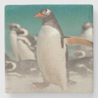 Penguin group on beach, Falklands Stone Coaster
