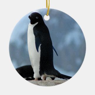 Penguin in Antarctica Ornament