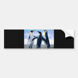 Penguin postcards bumper stickers