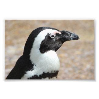 Penguin Profile Photo Print