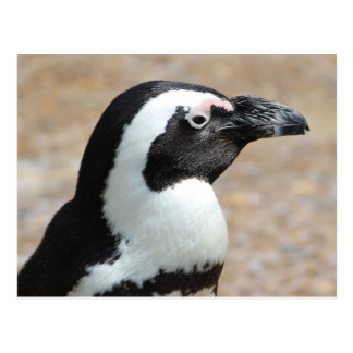 Penguin Profile Postcard