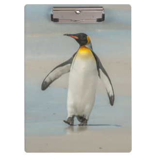 Penguin walking on the beach clipboard