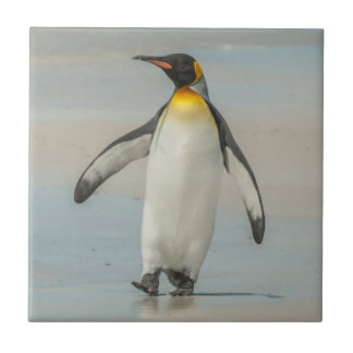 Penguin walking on the beach tile