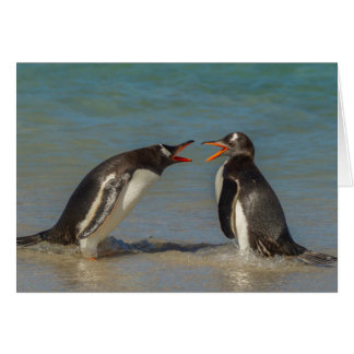 Penguins arguing, Falkland Islands Card