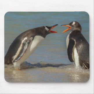 Penguins arguing, Falkland Islands Mouse Pad