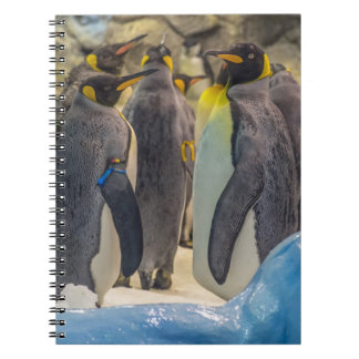 Penguins at the zoo notebook