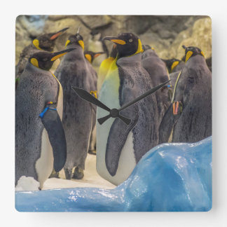 Penguins at the zoo wall clock