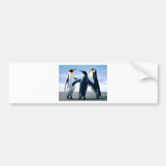 Penguins Bumper Stickers