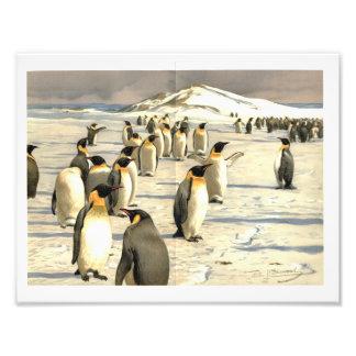 Penguins in Antarctica illustration Photo Print