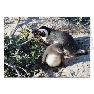 Penguins Mother and Baby South African Penguin Card